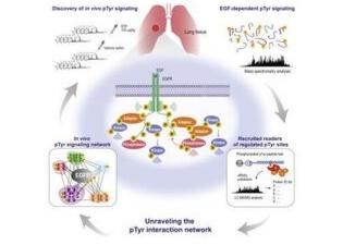 High-Throughput Methods for Phosphotyrosine Signaling