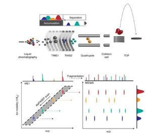 Application of diaPASEF for high-throughput and high-sensitivity proteomics with the Evosep One